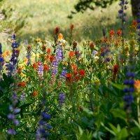 Two Factors that Determine Peak Bloom Times for Sierra Nevada Wildflowers at Lake Tahoe