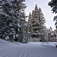 Cross-Country Skiing Explained (Part 3): The Grip Zone of Classic Cross-Country Skis