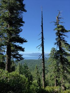 29 - Lake Tahoe Spied through the Trees