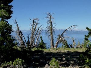 35 - Dying Trees with a Front Row Seat for the Sunrise at Lake Tahoe