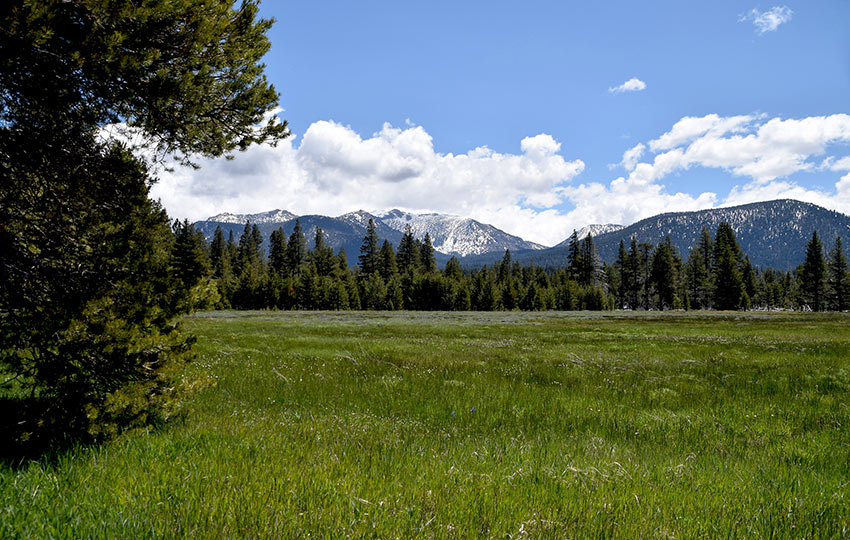 View of snowy Freel Peak from Washoe Meadows State Park