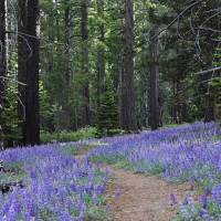 Short and Easy Hikes in South Lake Tahoe