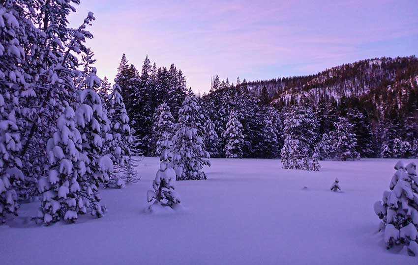 A winter wonderland with a purple hue at dusk
