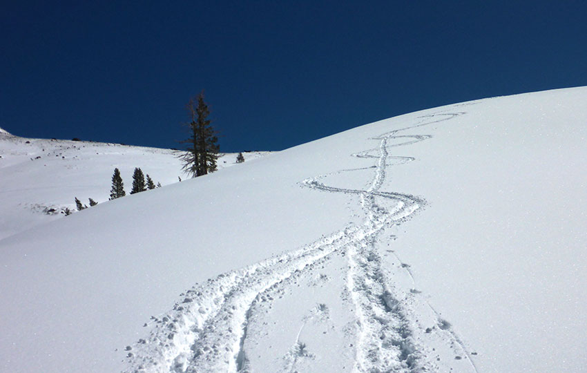 Ski tracks on a snowy mountain