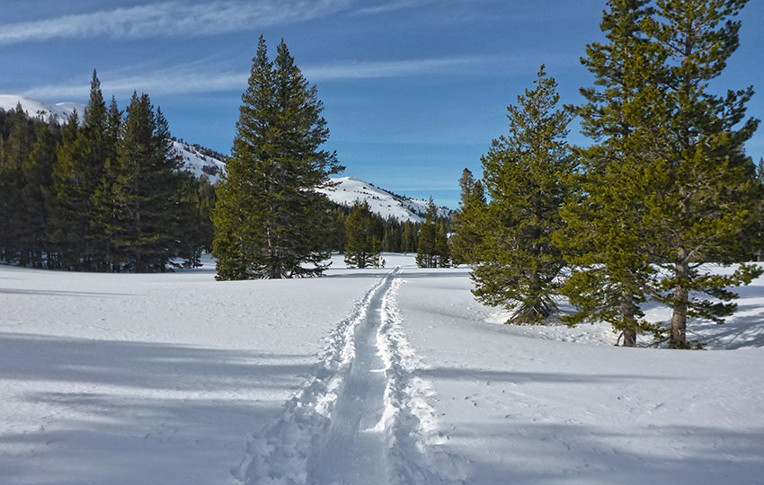 Tracks laid in the snow through the mountains by backcountry skiers