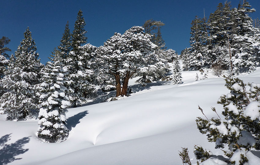 Snow-flocked trees and bluebird skies in the mountains