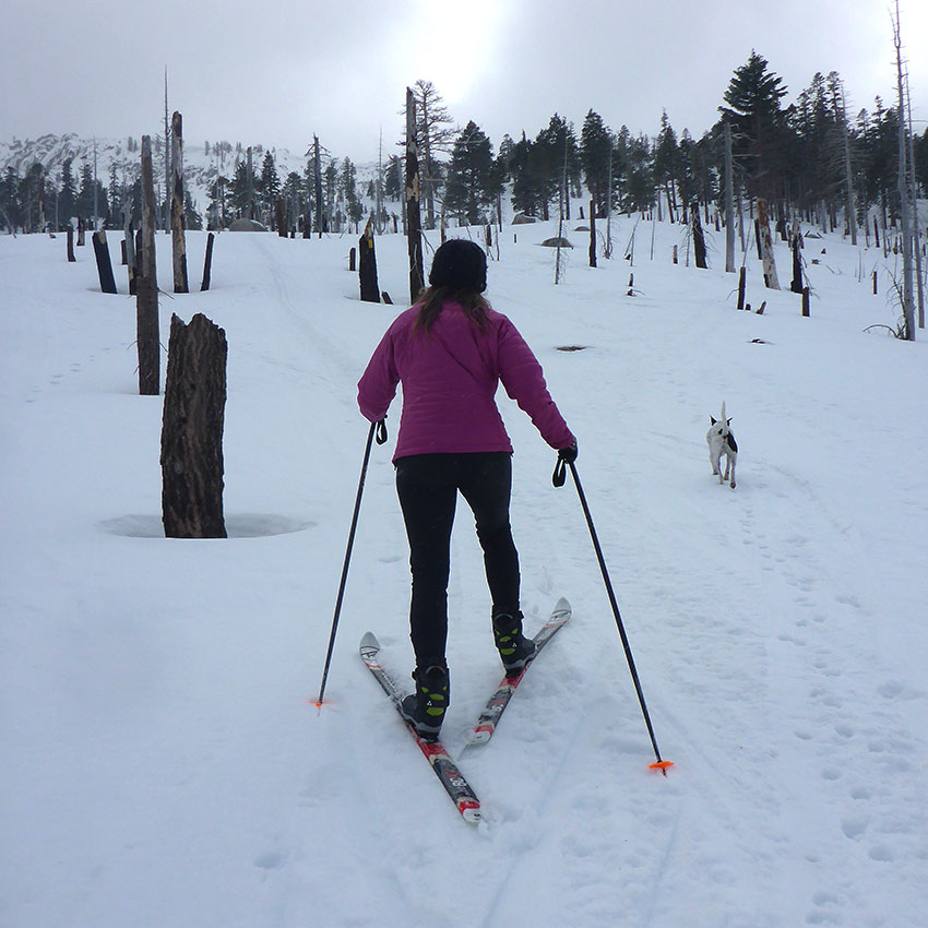 Cross-country skier using a narrow herringbone