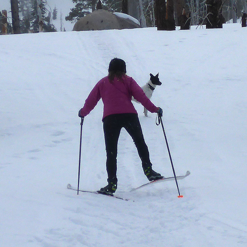Cross-country skier using a wide herringbone technique up a hill