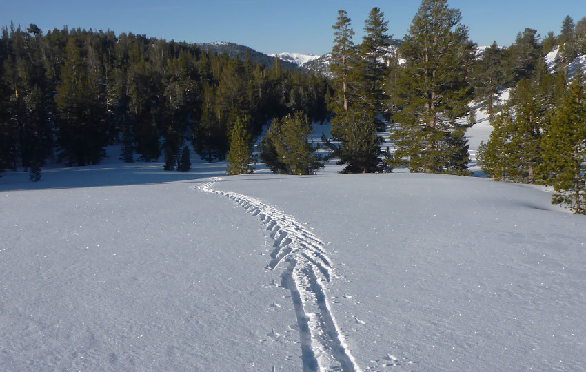 Herringbone to diagonal striding on cross-country skis