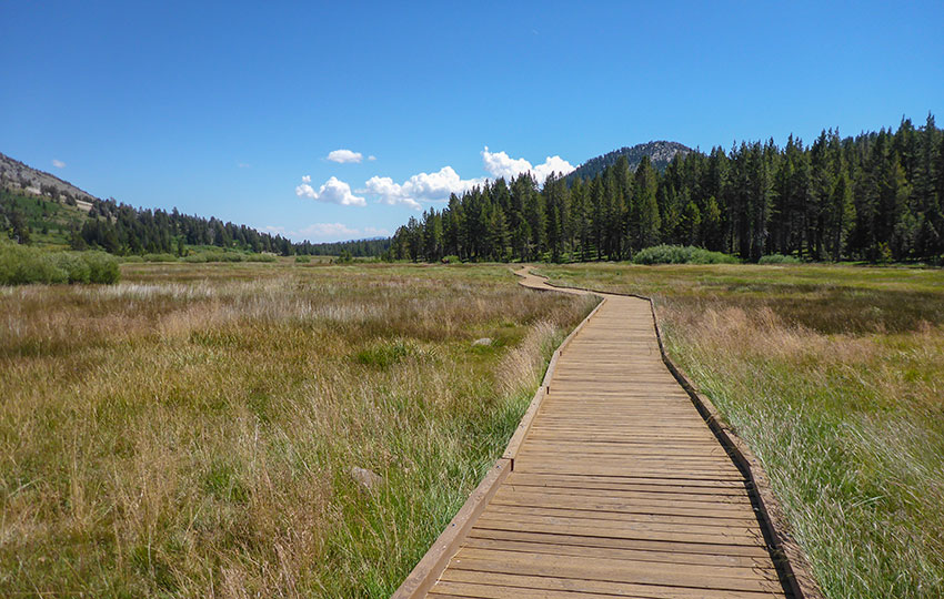 Wooden hiking walkway through meadow