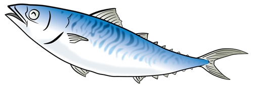 家康をもてなす『安土饗応膳』の魚が腐っていたという説