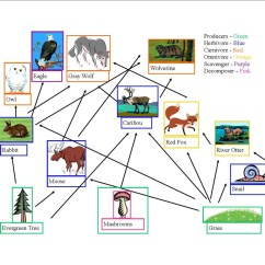 Wolf Food Chain Diagram Vw Passat Ccm Wiring Web Energy Pyramid And Trophic Table Taiga Forest