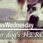 #WellnessWednesday | Be THE HERO YOUR DOG WANTS YOU TO BE + {Contest}