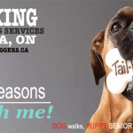 If you think you don't need to hire a dog walker, I'll give you 10 Killing reasons that will change your mind.