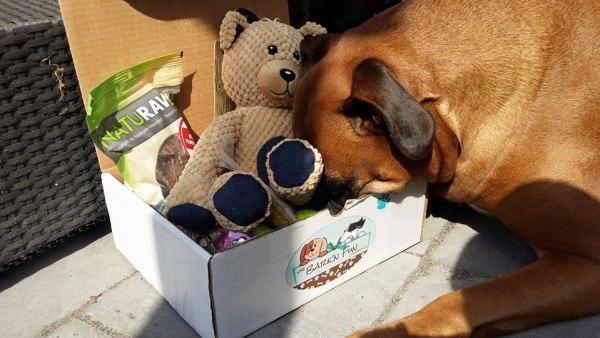 Mylo diving into The Bark'N Fun Company box