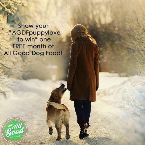 All-Good-Dog-Food-Co-toronto-contest-dog-blogger