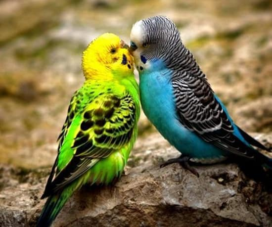 3d Couple Name Wallpaper 40 Amazing Pictures Of Animals Kissing Each Other Page 2