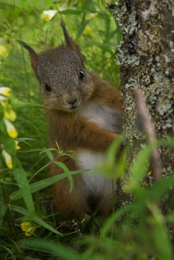 Fall Squirrel Wallpaper 60 Beautiful Pictures Of Squirrels