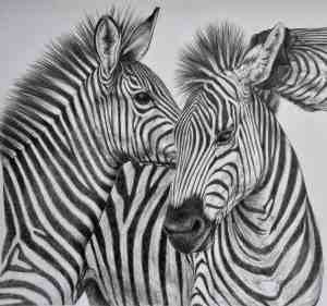 animal sketches realistic animals sketch wild zebra inspiration drawings drawing pencil tailandfur easy hipster pages