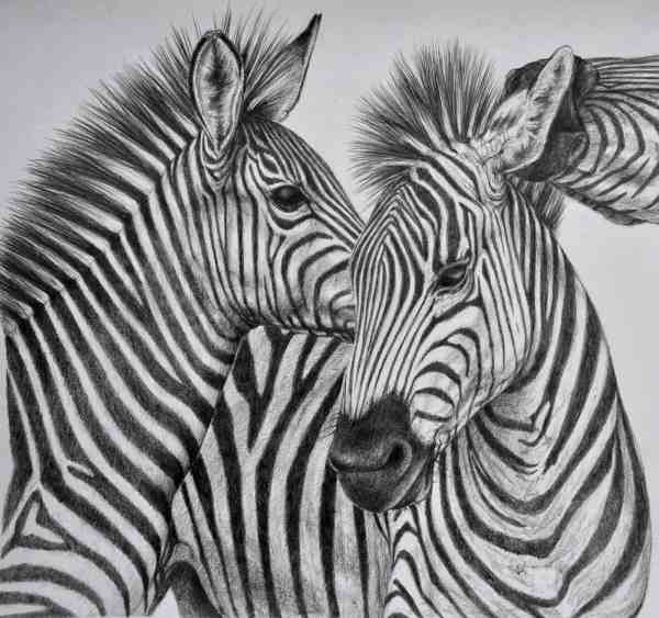 Beautiful And Realistic Animal Sketches Inspiration