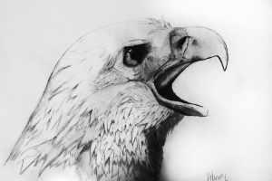 drawing pencil animals animal sketches eagle drawings bald realistic sketch inspiration deviantart easy draw simple birds tailandfur bird beginners random
