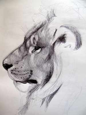 animal sketches drawings realistic sketch pencil inspiration animals drawing tailandfur lion horse 3d