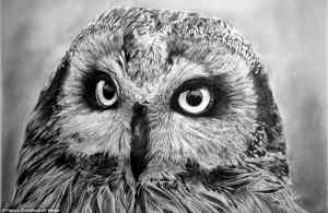 realistic drawings sketches animals animal pencil drawing owl drawn detailed hyper inspiration franco ever draw hyperrealistic sketch water eyes face