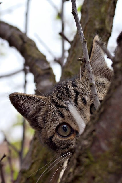 Peek A Boo With Cute Animals 40 Pictures