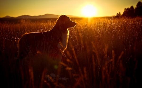 Alone Crying Girl Hd Wallpaper 40 Beautiful Animal Photography At Sunset