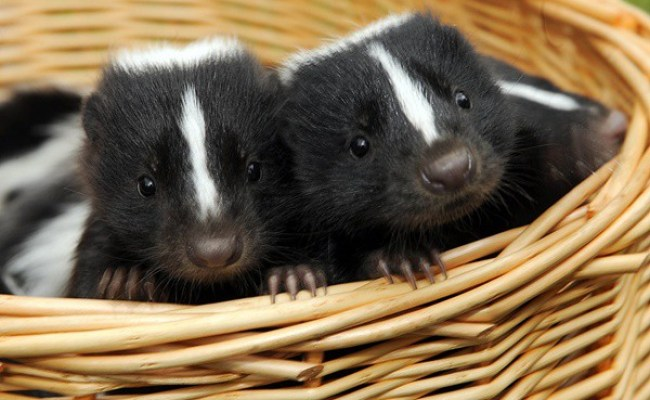 5 Exotic Small Size Pets For Kids Tail And Fur