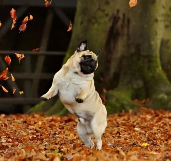 Fall Leaves Dancing Wallpaper 40 All Time Funny Pictures Of Dancing Animals