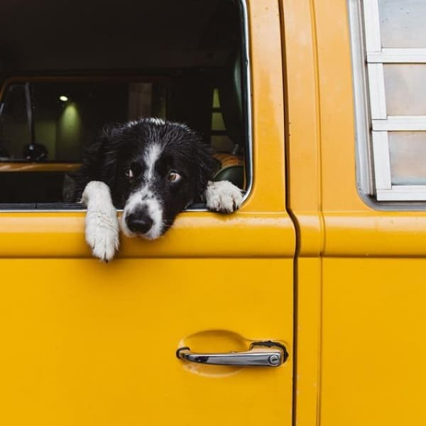 40 Pictures Of Short Haired Border Collie