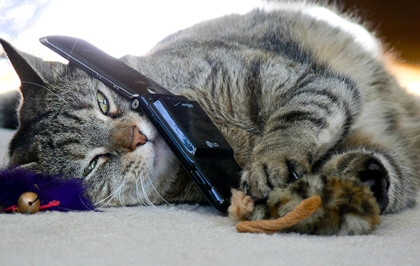 Image result for cat on phone