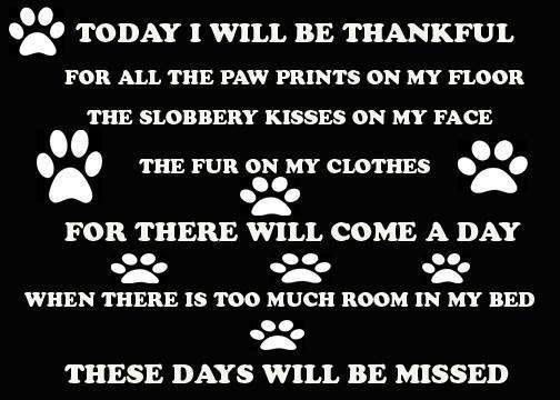 Dogs, RIP