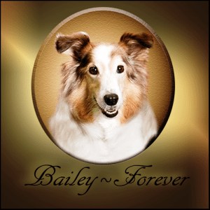 Bailey FOREVER