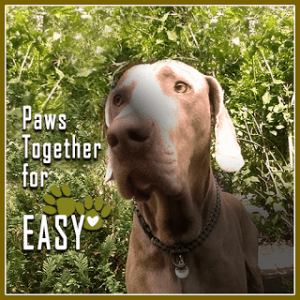 paws-together-for-easy