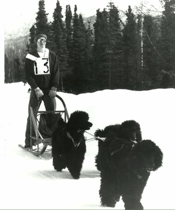 Poodles-Alaska-John-Suter