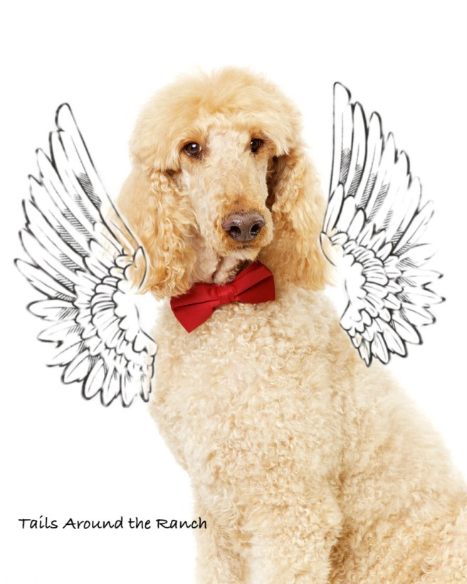 Angel Sam