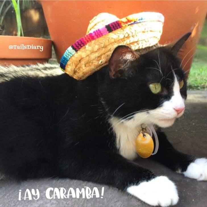 Ay Caramba Tatiana has a sombrero