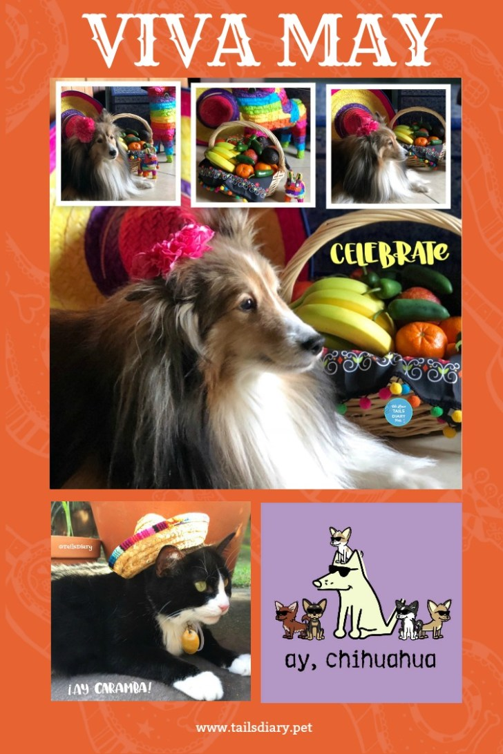 May is here and with it comes many pawsome celebrations, like Star Wars Day, Cinco de Mayo, and Mother's Day. Not to mention my birthday too! And since we love to party wanted to share with you some pawsome tips on how you can include your four legged BFF's in this fun May parties.
