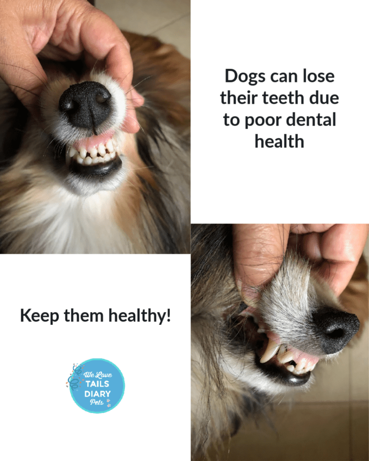 Professional Dental Cleaning is key for good dog dental health