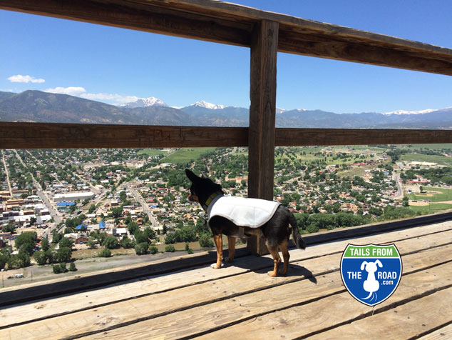 """Romeo with his cooling jacket on on """"S"""" mountain overlooking Salida."""