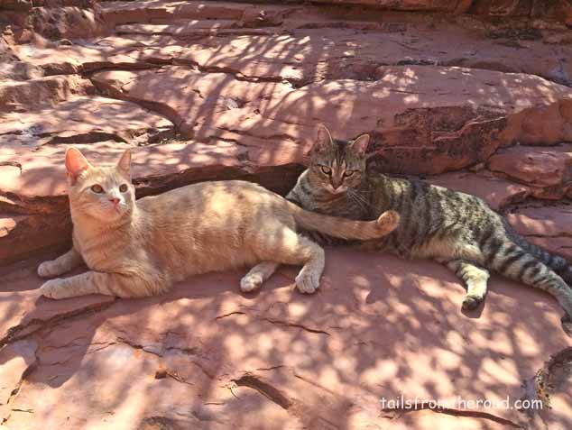 Walking the kitties, Tanner & Blue