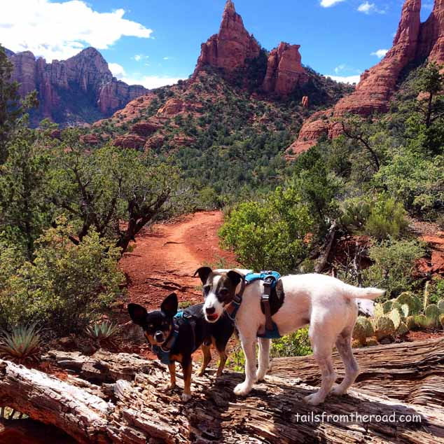 There are over 200 trails to take in Sedona, so much to see!