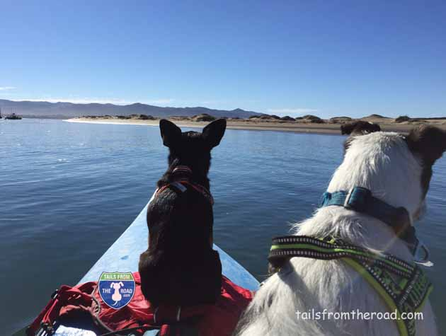 Romeo and Mick on the kayak in Morro Bay.