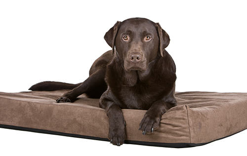 Go to Bed – How to teach your dog