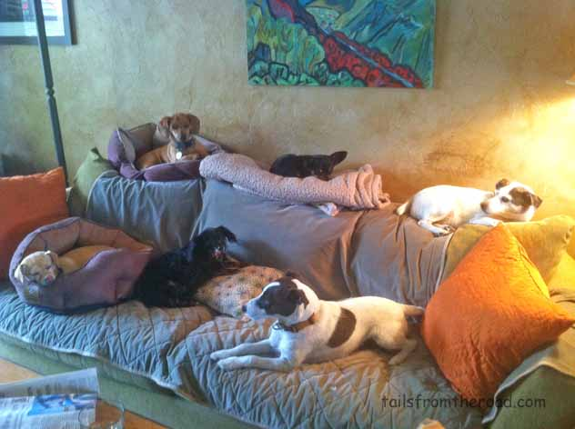 The little dogs always took over the couch.