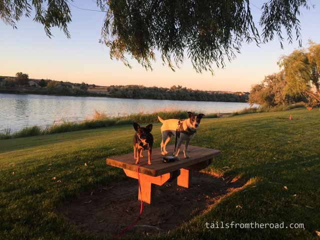 The dogs and I enjoyed an evening stroll along the Snake River.