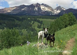 Mick & Romeo near Telluride, CO