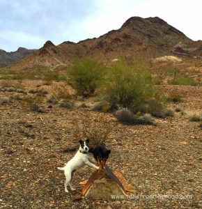Two goofy dudes in the desert.